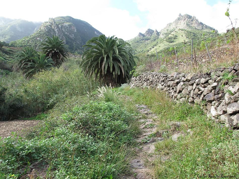 Sendero Las Vueltas - Taganana - Tenerife