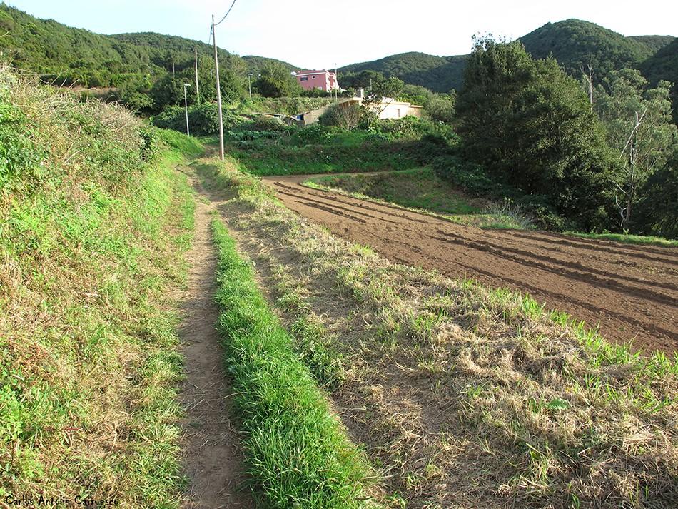 Pista de Las Hiedras - Anaga - Tenerife