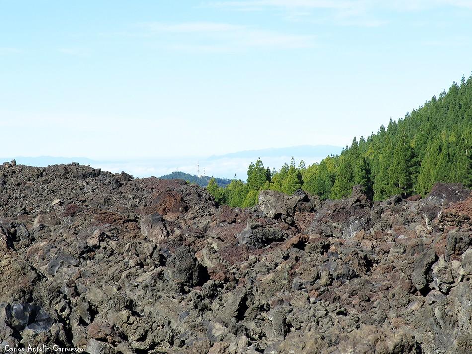Chinyero - Corona Forestal - Tenerife