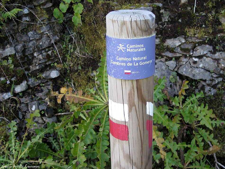 Parque Nacional de Garajonay - La Gomera - gr131