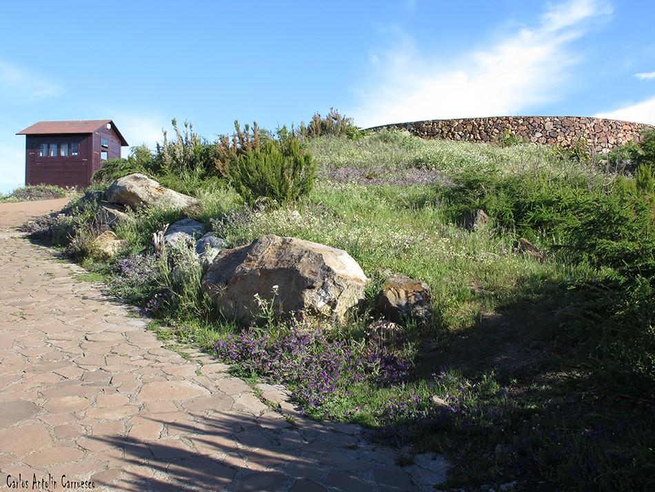 Alto de Garajonay - Parque Nacional de Garajonay - La Gomera