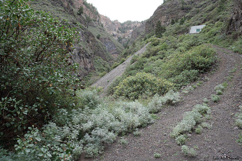 Las Hiedras - Arico - Tenerife