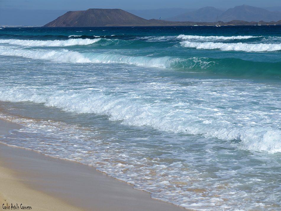 Corralejo - Fuerteventura - lobos