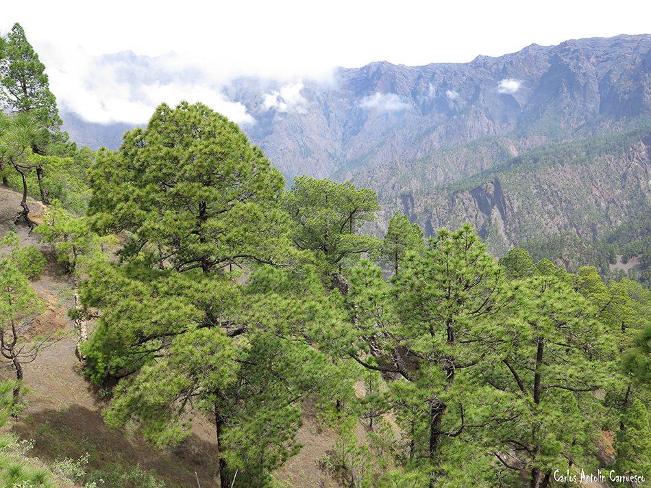 Mirador de Las Chozas - Caldera de Taburiente - La Palma