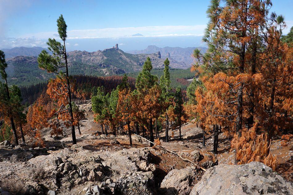 Degollada de Piedras Blancas - Gran Canaria