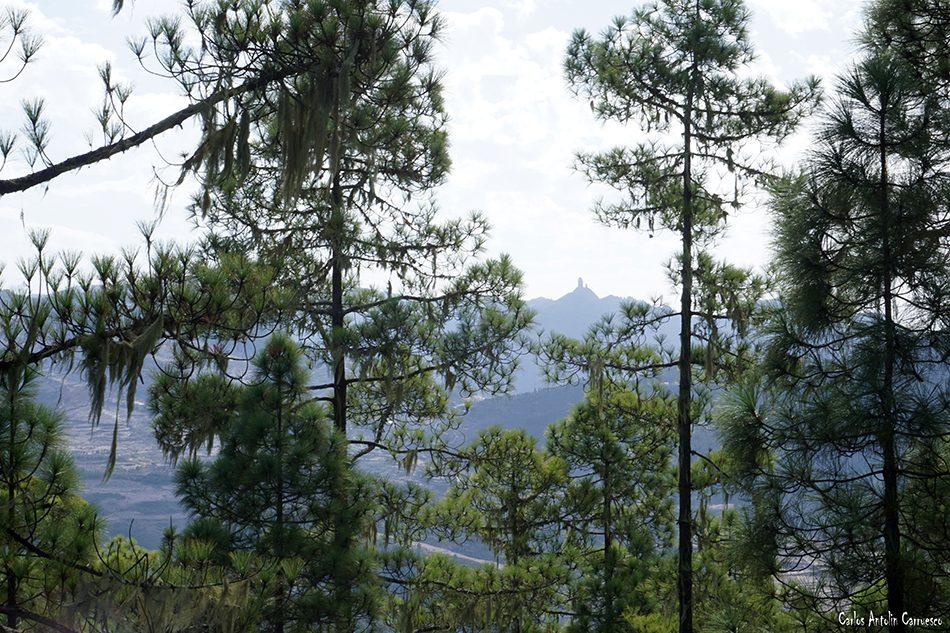 Degollada del Humo - Siete Pinos - Gran Canaria - Parque Natural de Tamadaba