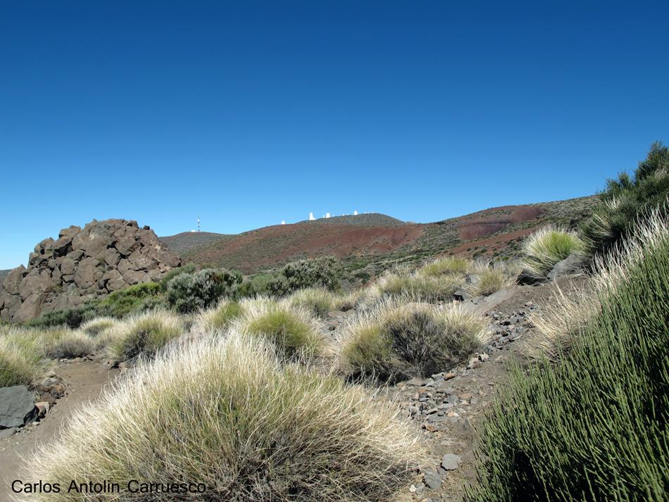 Ruta de la Esperanza - TF24 - Tenerife - izaña