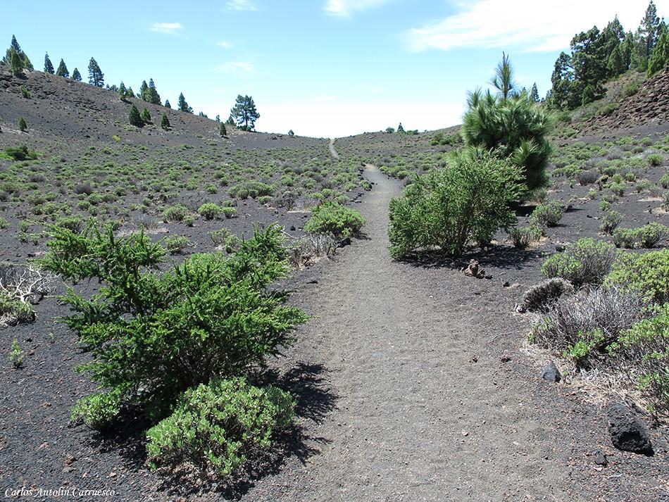 Ruta de Los Volcanes - La Palma