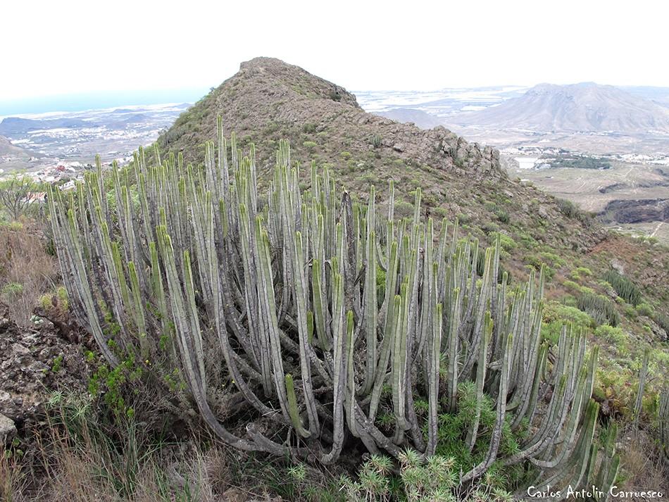 La Atalaya - Roque del Conde - Tenerife