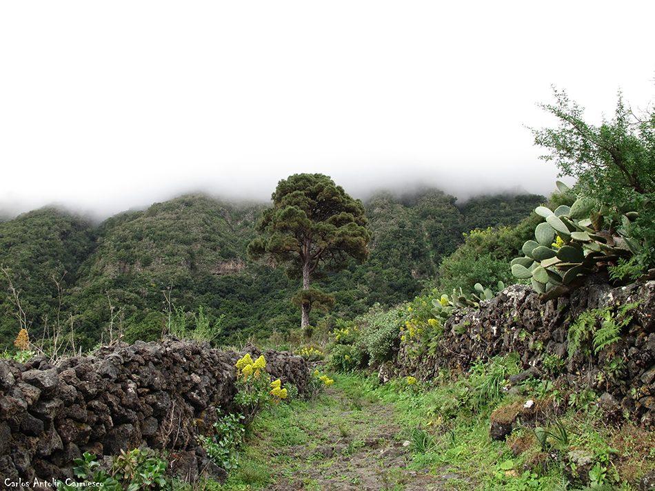 Frontera - Camino de Jinama - El Hierro