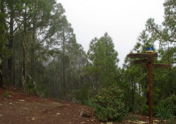 Parque Natural de Tamadaba - Gran Canaria - cruce de senderos Tamadaba/Agaete/El Hornillo
