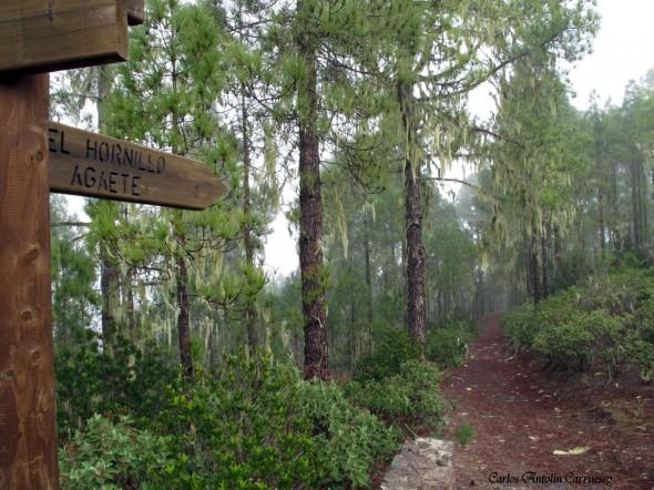 Parque Natural de Tamadaba - Gran Canaria - el hornillo