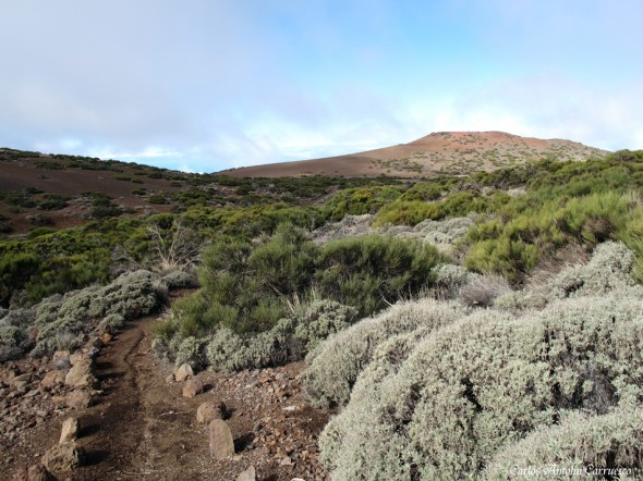 Montaña Limón - Tenerife