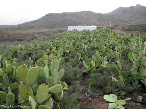Meseta del Llano de Corral - Cercados de Araña - Gran Canaria