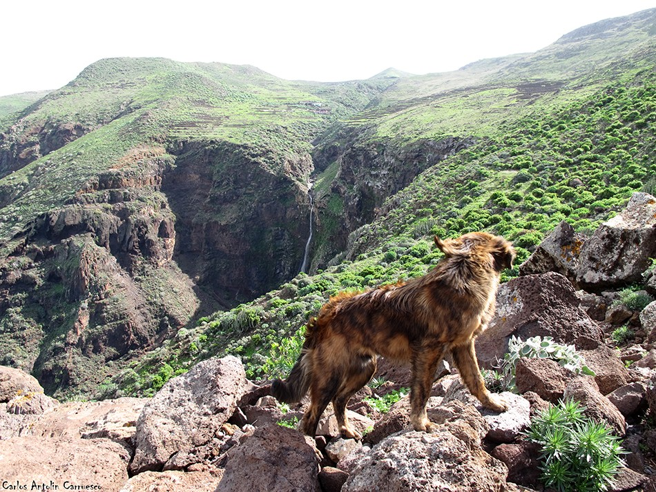 Parque Rural de Teno -Tenerife