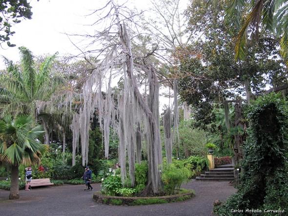 Jardín Botánico - Puerto de La Cruz (La Paz) - La Orotava - Tenerife