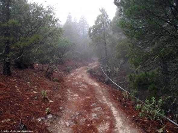 Tamadaba - Gran Canaria