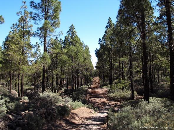 Degollada de Los Hornos - Área Recreativa Llanos de La Pez - Gran Canaria