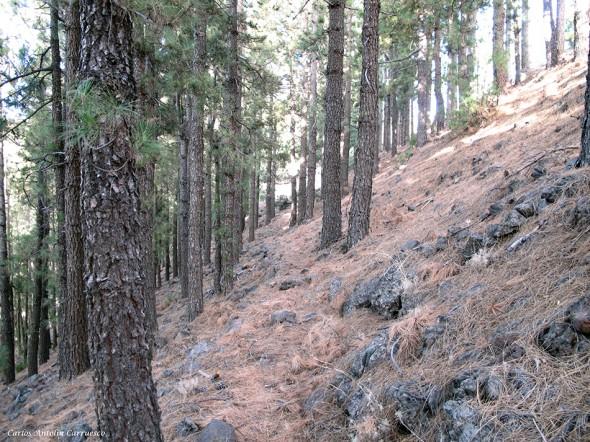 Montaña Ayosa - Caldera Pedro Gil - Tenerife