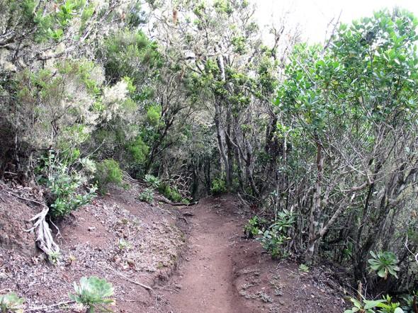 Anaga - Tenerife