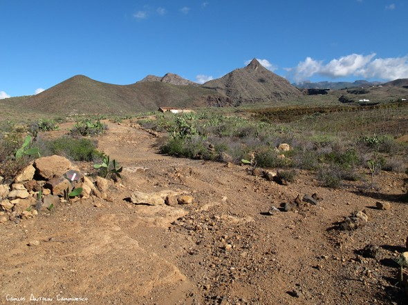 Vento - Arona - Imoque - Tenerife