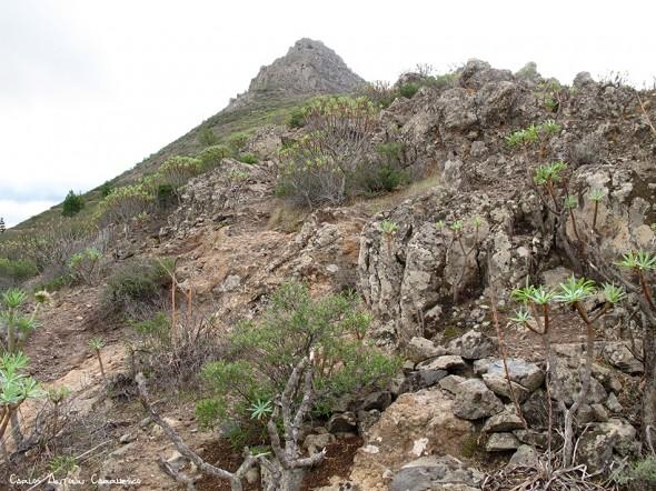Roque Imoque - Tenerife