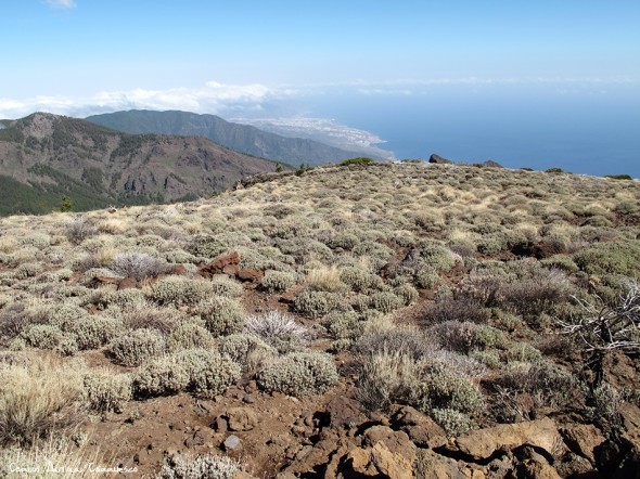 Cho Marcial - Pico del Valle - P.N. del Teide<br />Tenerife