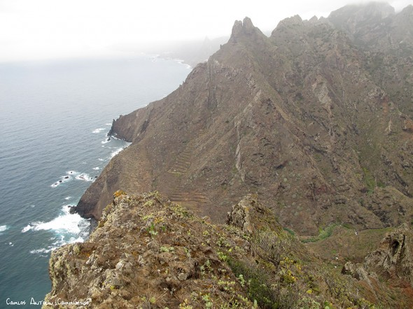 El Marrubial - Anaga - Tenerife