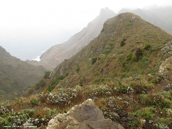 Palo Hincado - Taborno - Tenerife