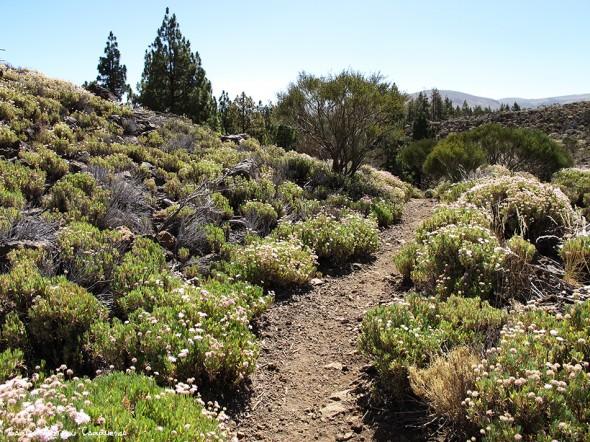 sendero Nº25 - P.N. del Teide - Tenerife