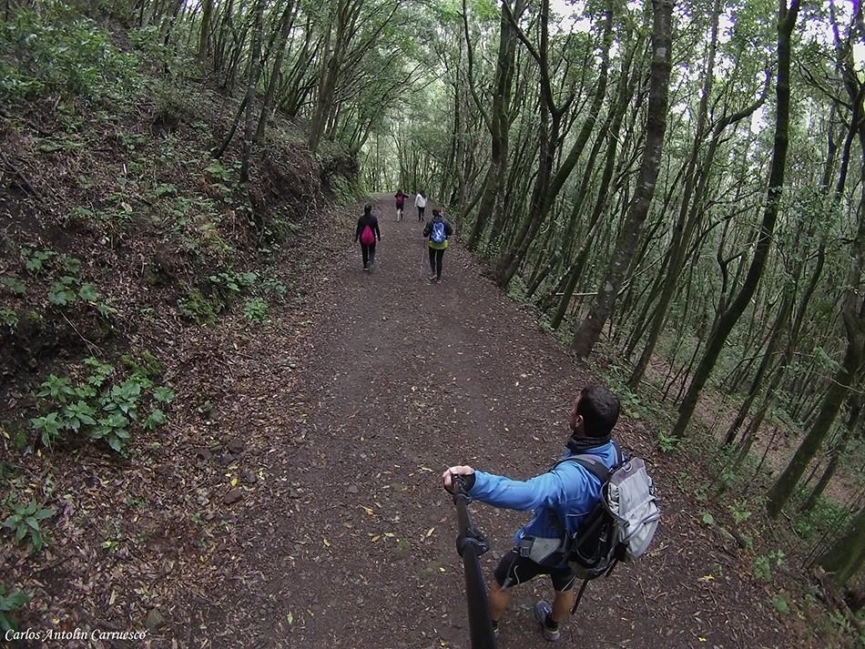 Monte del Agua - bosque de laurisilva - Tenerife