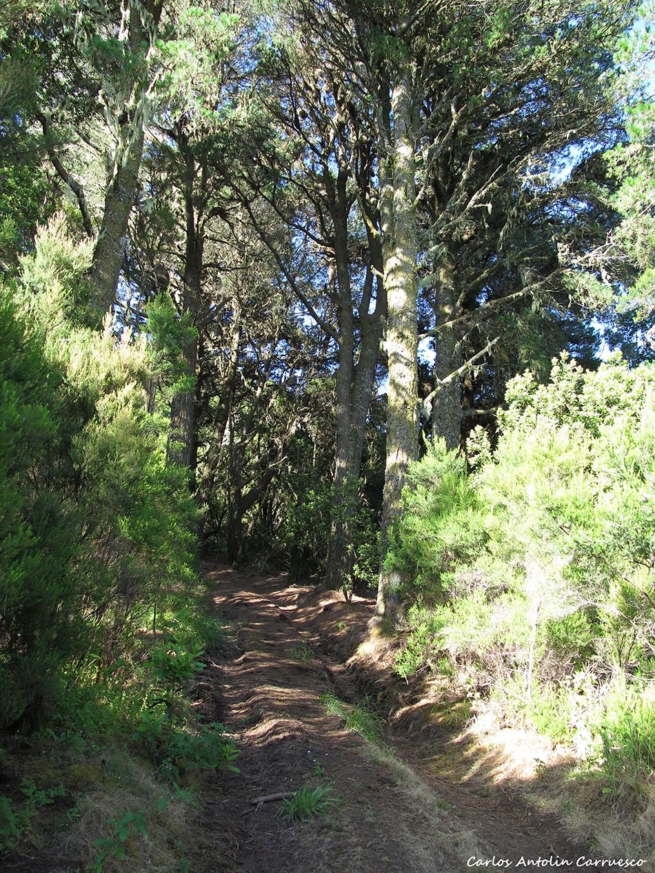 Hoya del Pino - El Hierro