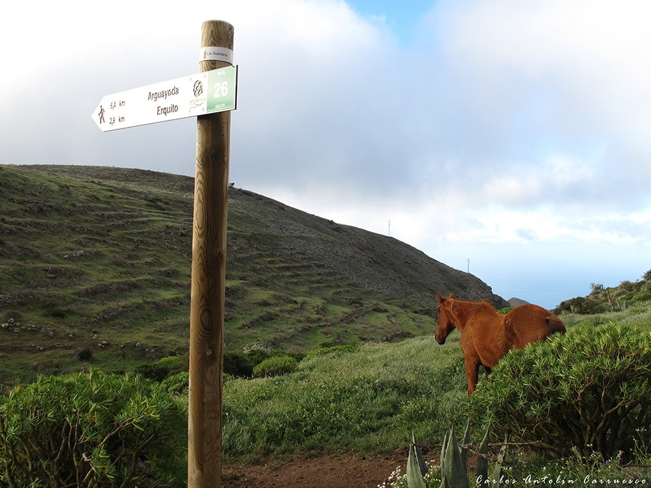 GR131 - Igualero - Parque Nacional de Garajonay - La Gomera