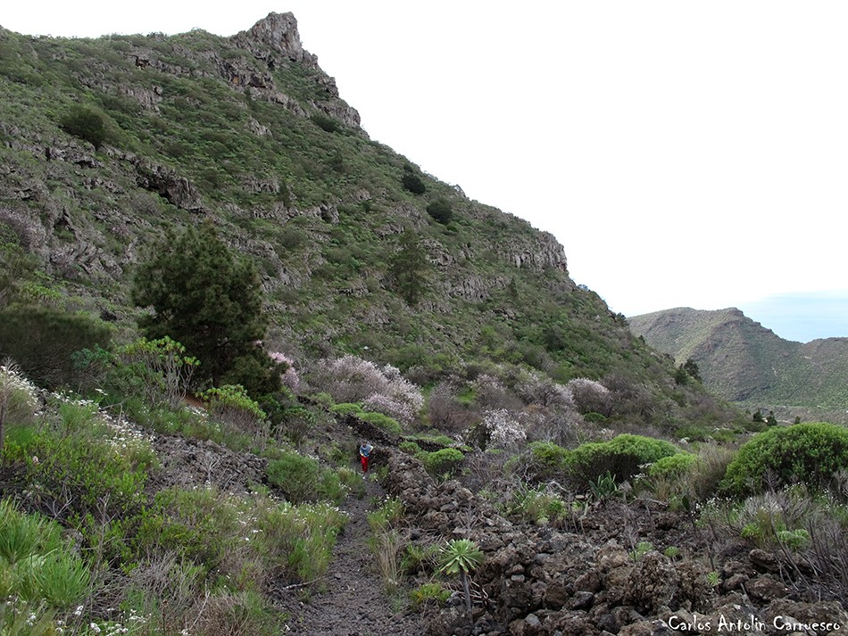 Arguayo - Tamaimo - Tenerife