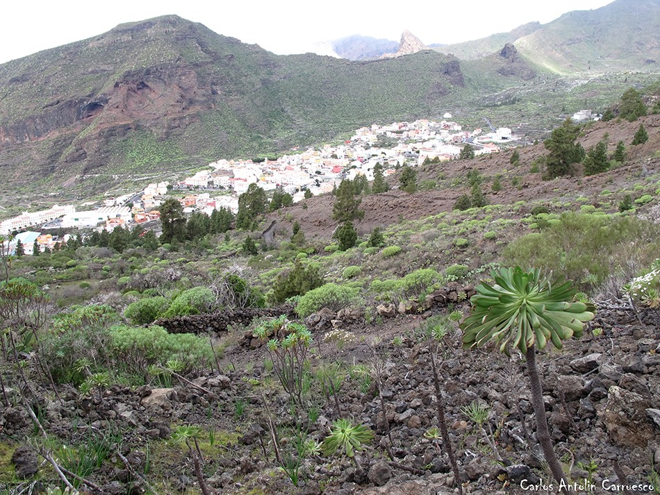 Arguayo - Tamaimo - Tenerife - guama - risco blanco