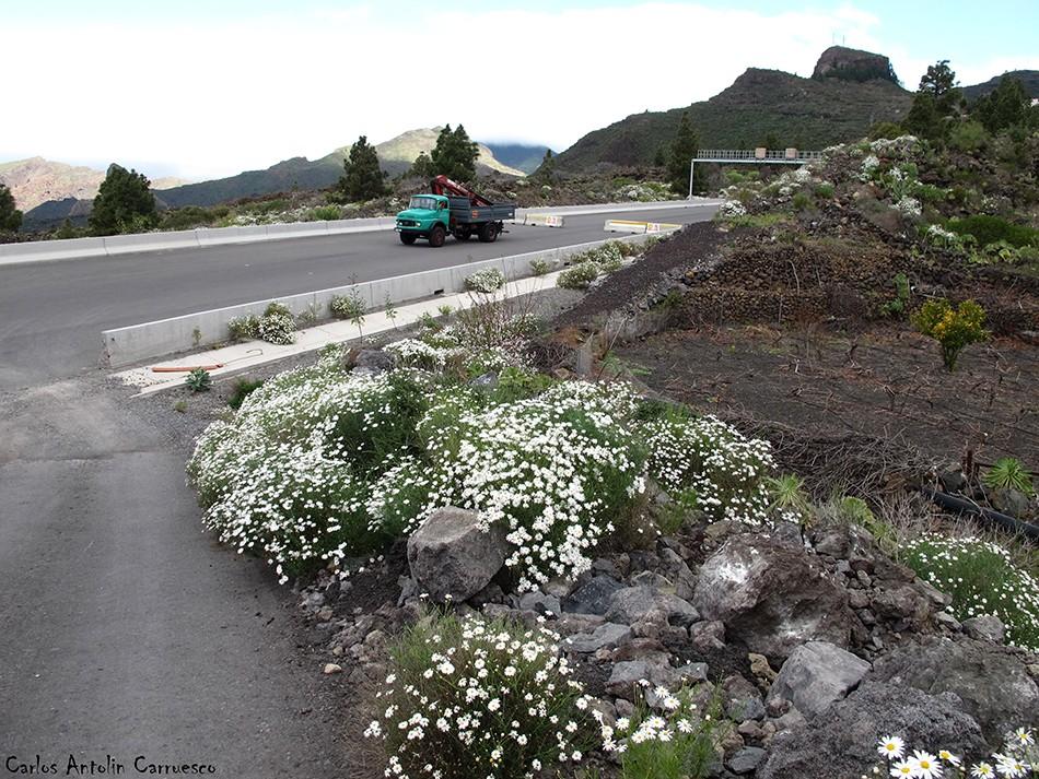 Arguayo - Tenerife