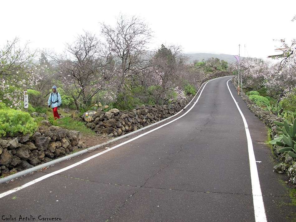 Ruta de los Almendros - Tenerife
