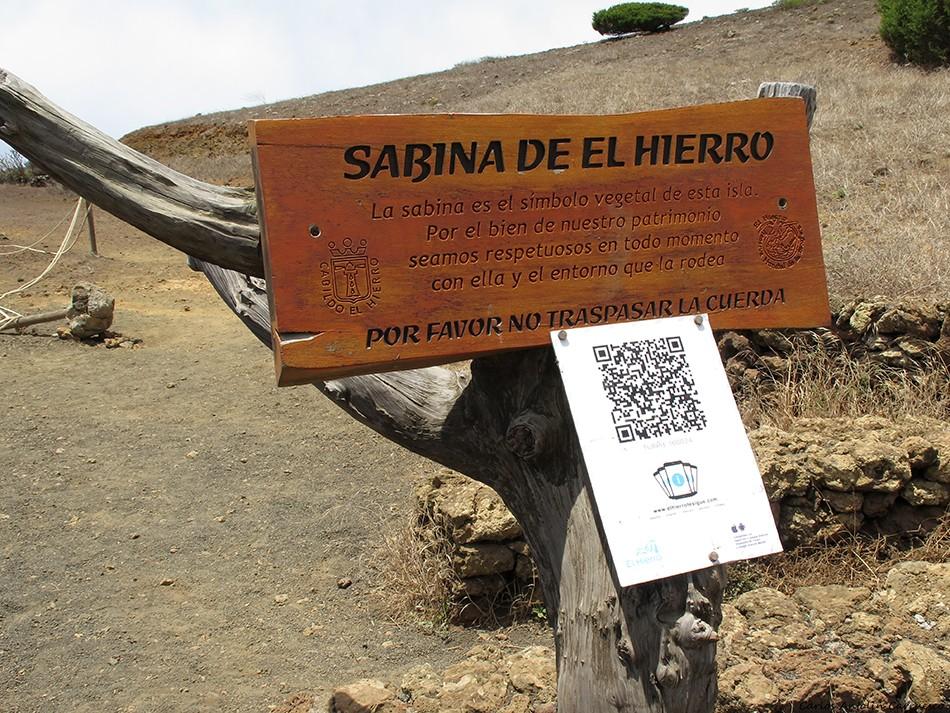 La Dehesa - El Sabinar - El Hierro - Sabina de El Hierro