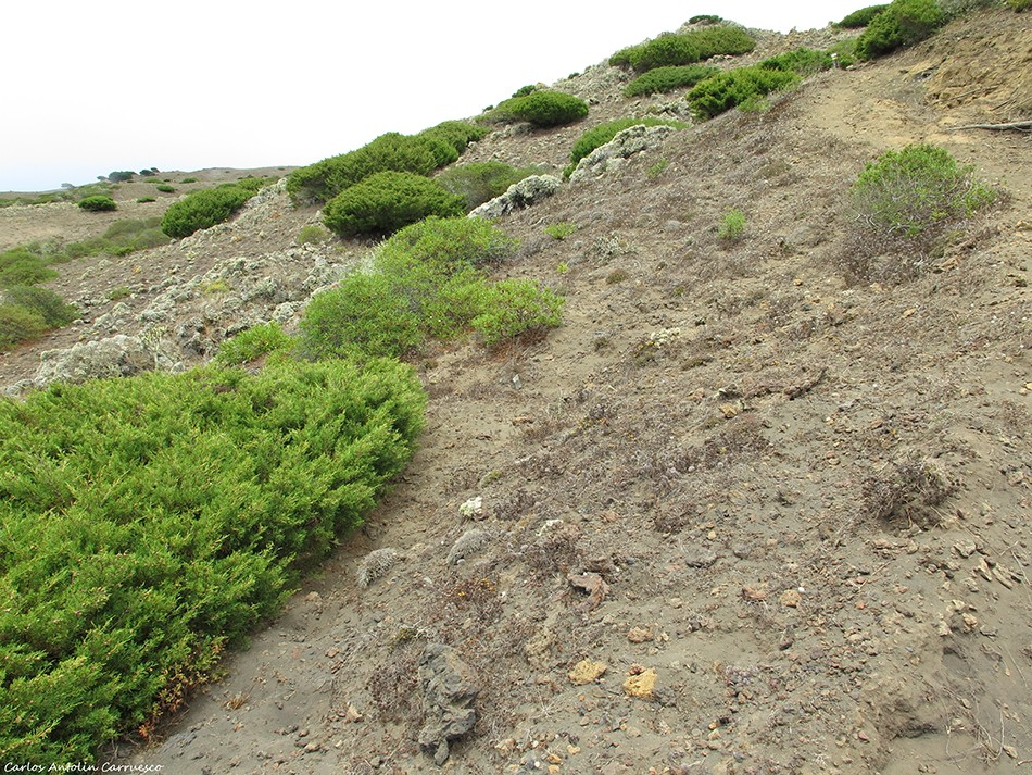 La Dehesa - El Sabinar - El Hierro