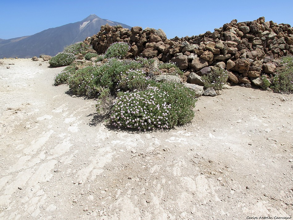 Sendero Nº 15 - Alto del Guajara - Tenerife
