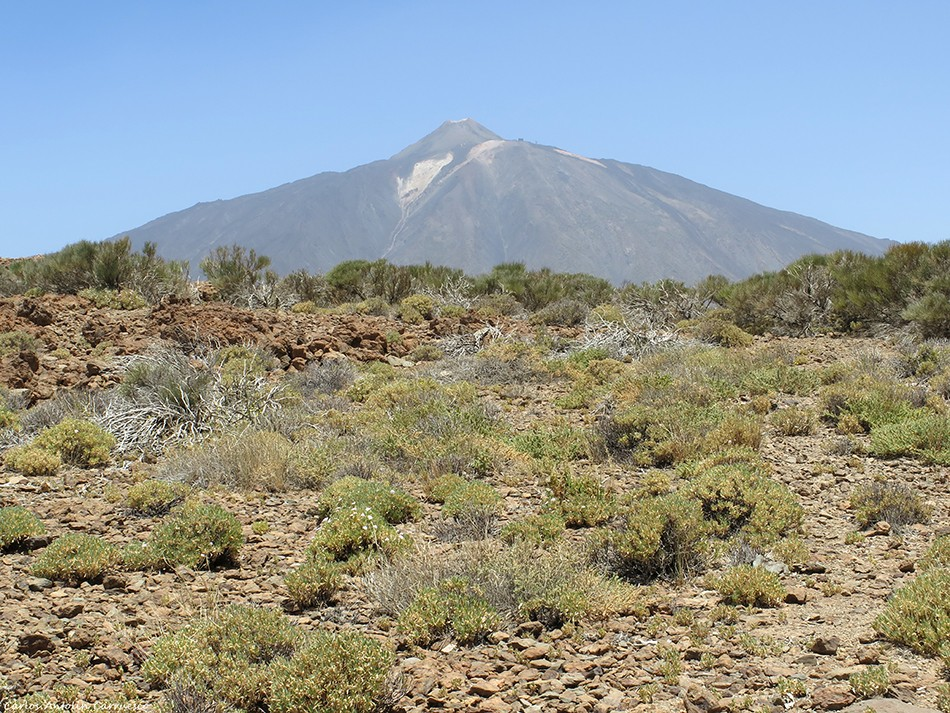 Teide - Parque Nacional del Teide - Tenerife