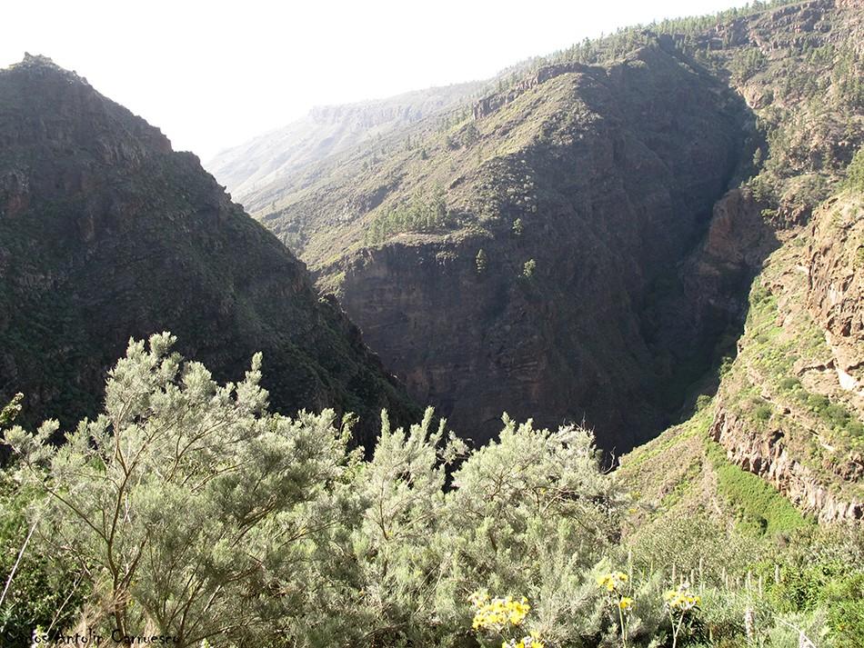 Adeje - Camino de Carrasco - Tenerife - barranco del infierno