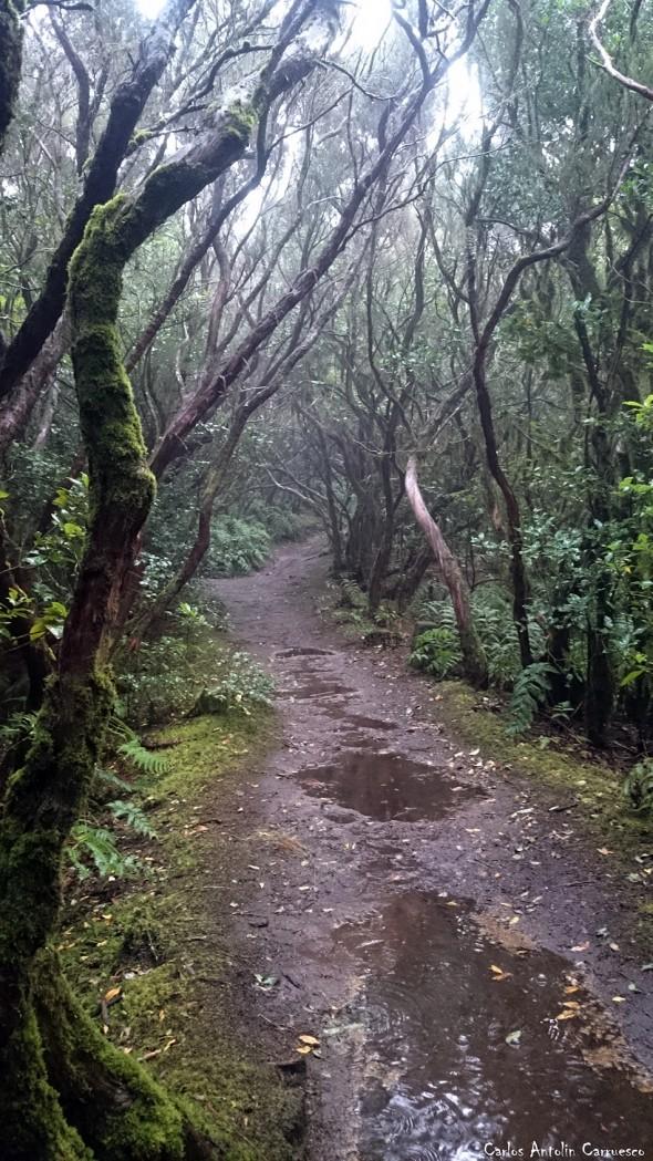 El PIjaral - Reserva Mundial de La Biosfera - Tenerife