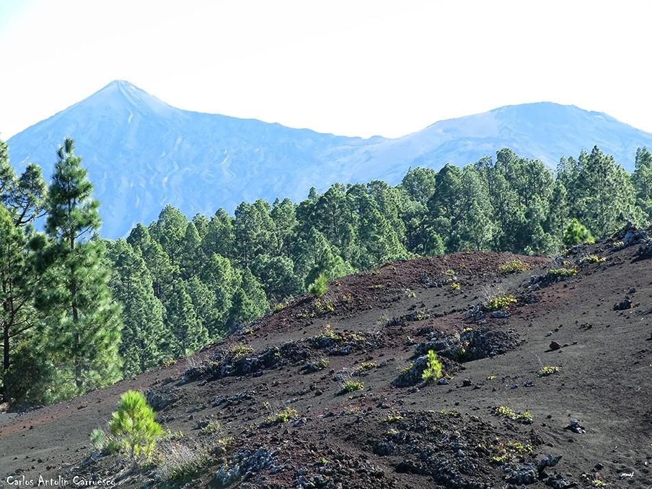 Corona Forestal - Garachico - Tenerife - Teide - Pico Viejo