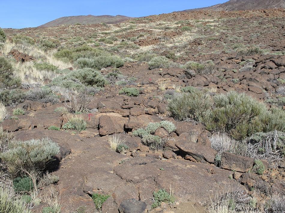 Regatones Negros - Ultra Bluetrail - Tenerife - Parque Nacional del Teide - grafitis
