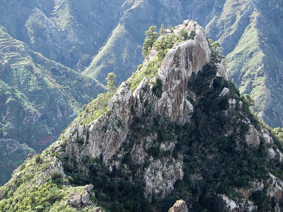 Roque de los Pinos - Anaga - Chinamada