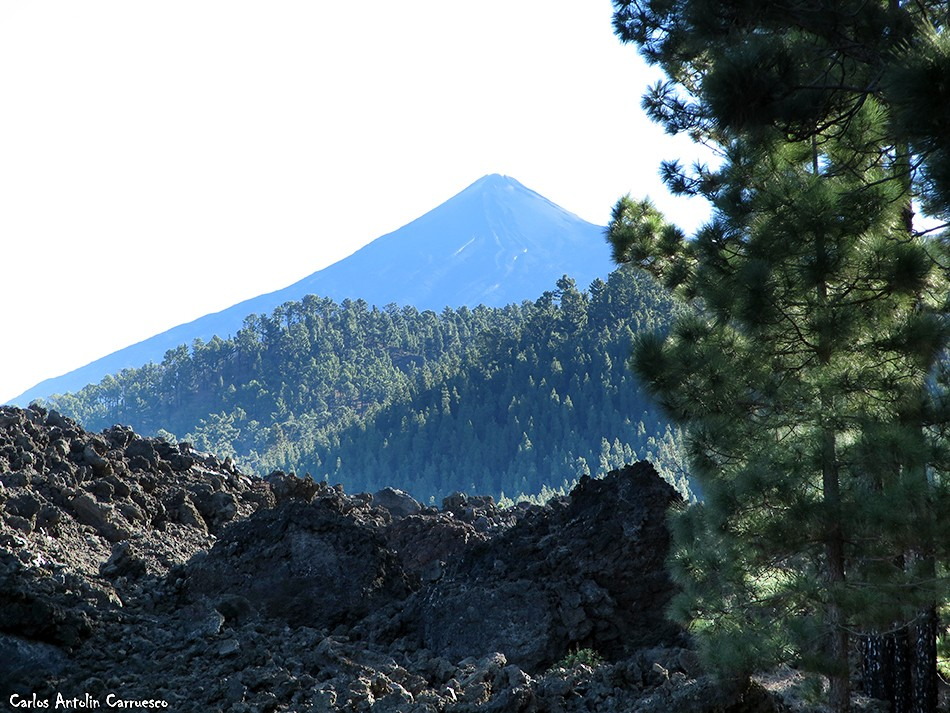 Chinyero - Corona Forestal - Tenerife - teide