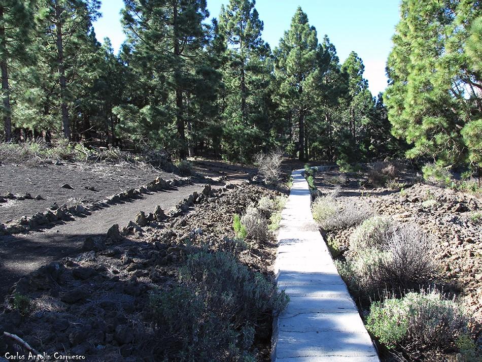 Garachico - Corona Forestal - Tenerife
