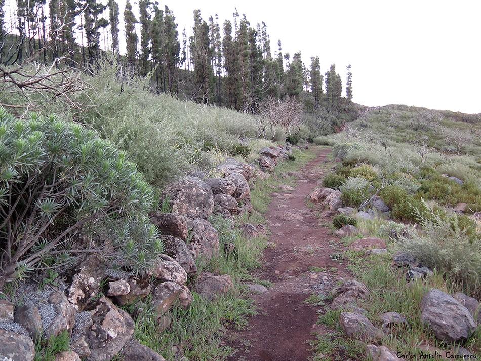 Parque Nacional de Garajonay - GR131 - La Gomera