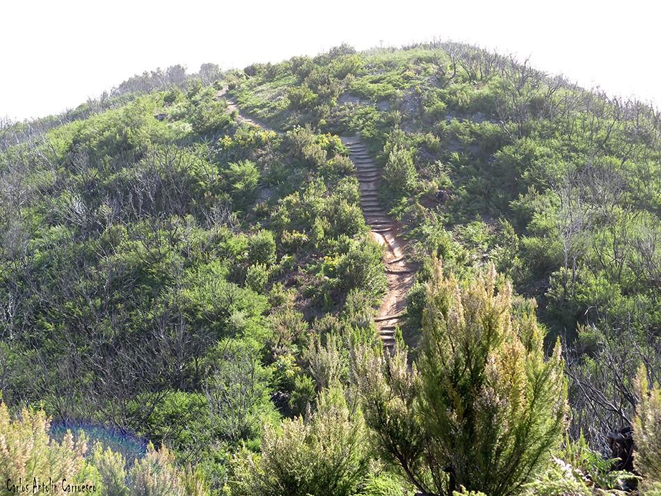 Alto de Garajonay - Parque Nacional de Garajonay - La Gomera - gr131
